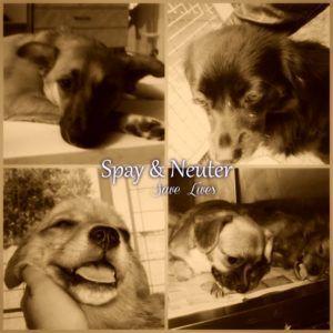 millaisia koiria_SNSL_kuva