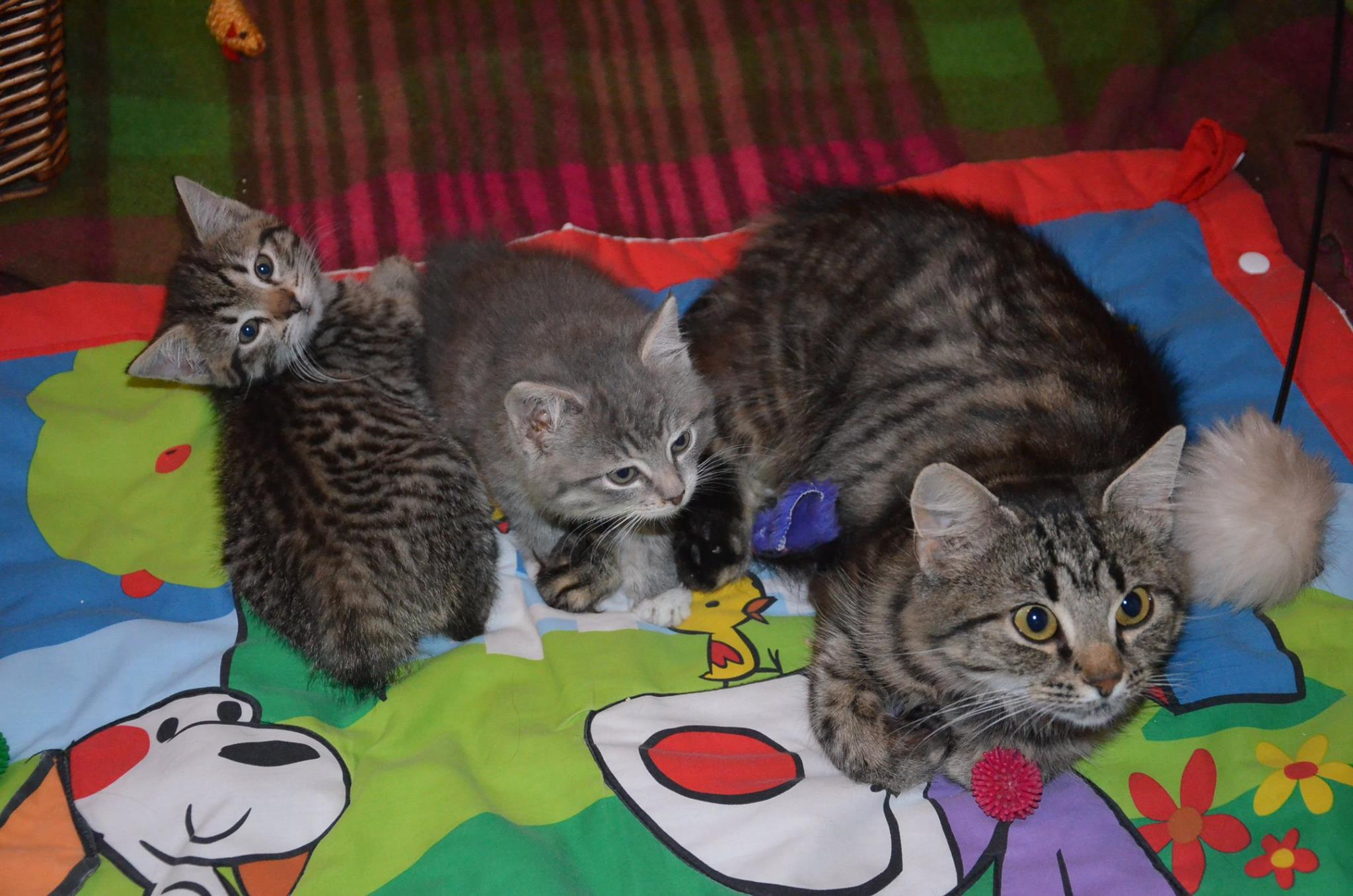 Luangel,Sissi ja Emme