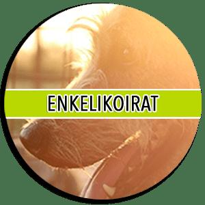 enkelikoirat