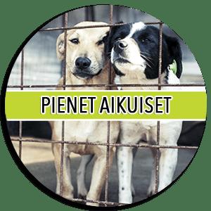 Koirat Hoitoon