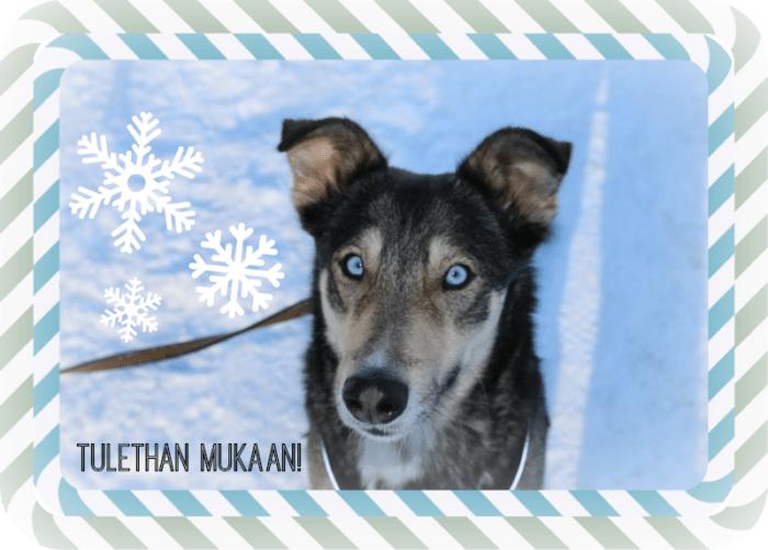korson_koiralenkki_lota
