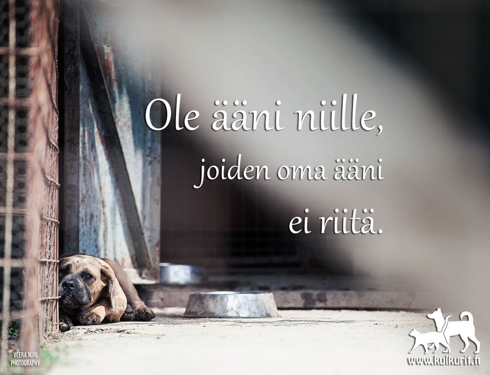 ole_aani_niille_joiden_oma_aani_ei_riita_veera_nuri