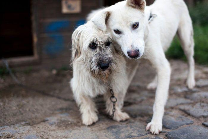 Kaksi koiraa Rosiori de Veden kunnallisella tarhalla 25.8.2016.