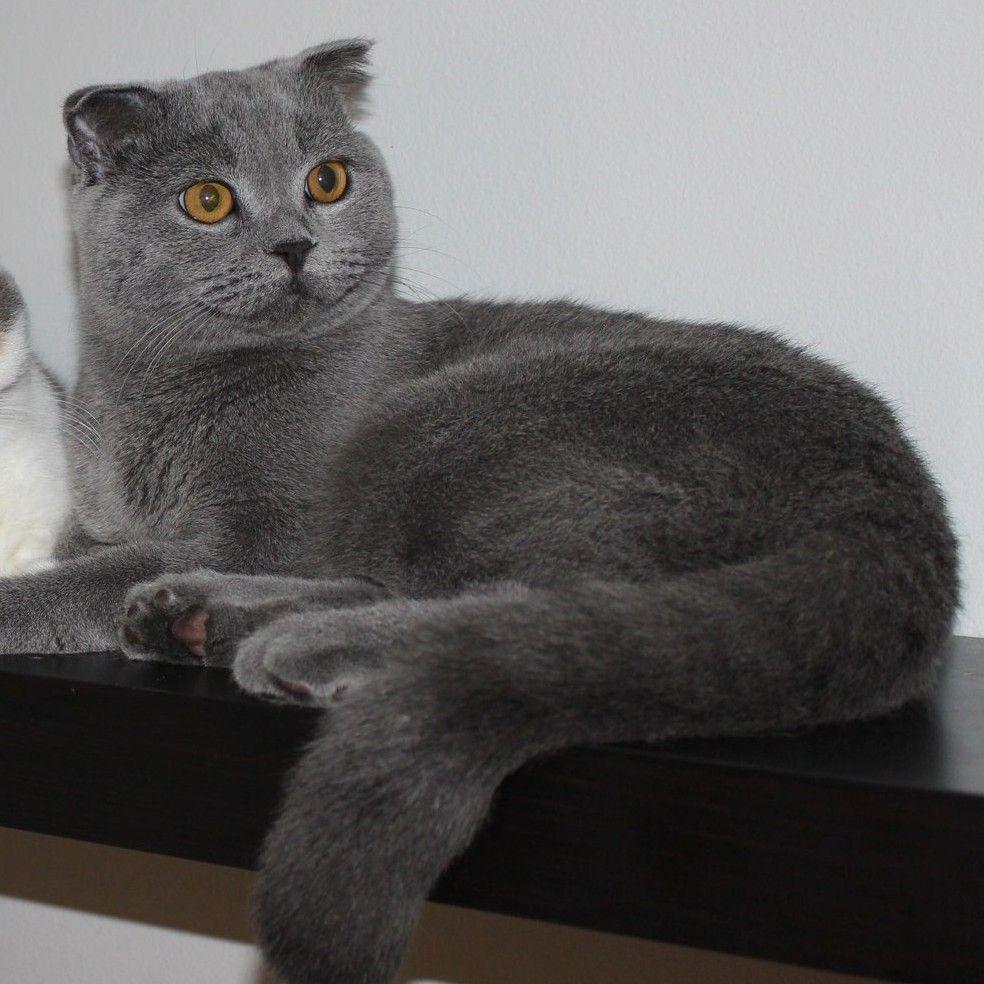 Kotia etsivä kissa: RASSE (ent. Giorgio) Suomessa