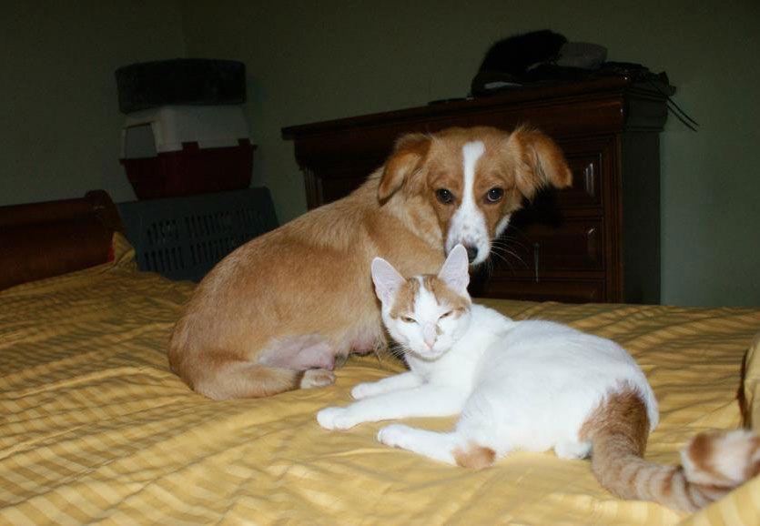 Sonia ja kissa