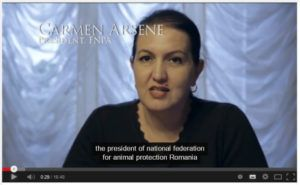 Kuvassa Carmen Arsene Romanian National Federation for the Protection of Animals -ogranisaatiosta