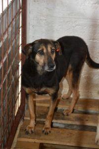 Rita on yksi koirista, jotka yksityiselle tarhalle hyökänneen ASPA:n rankkurit veivät. Rita menetti rankkureiden käsittelyssä tajuntansa ja sen luultiin kuolleen.