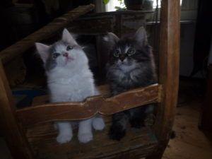 Karpo ja Elviira