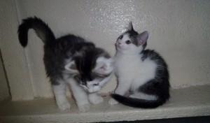 Rufus ja Vertti