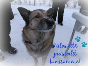 Kuva: Leila Mattila