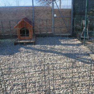 Luiza hankki Ellarialle kopin, johon koiraneito asettui odottamaan omaa kotiaan Suomesta. Helmikuu 2015