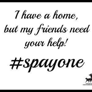spayone_poster6