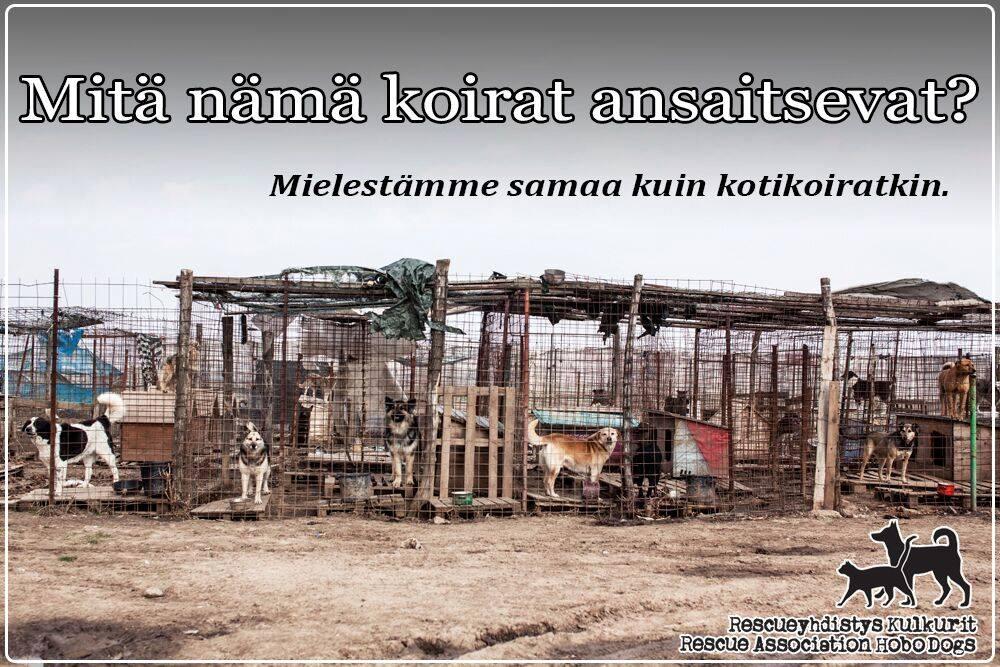 mita_nama_koirat_ansaitsevat