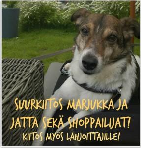 Kuvassa Kulkurien kautta kodin saanut Dodo-koira.