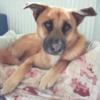 Kotia etsivä koira: MAXI (Suomessa)