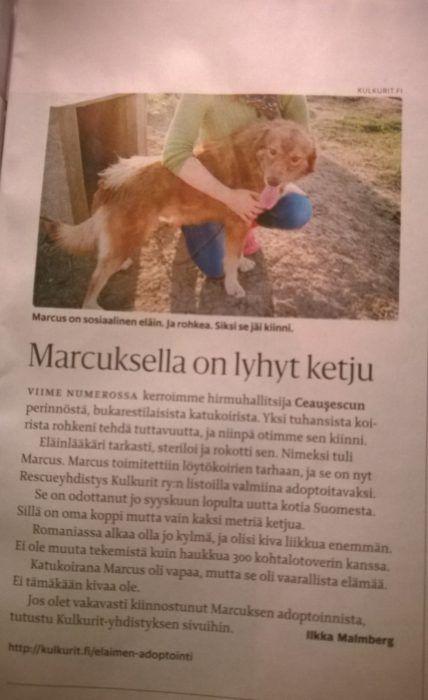 marcus_malmberg
