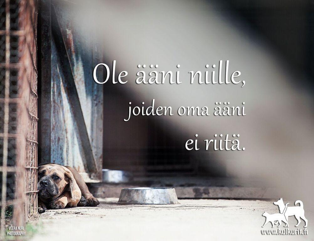 aani_niille_joiden_oma_aani_ei_riita