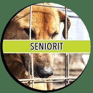 seniorit