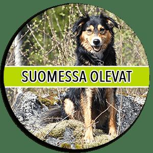 Koirat - Rescueyhdistys Kulkurit ry - Matkalla kotiin! - Kulkurit.fi