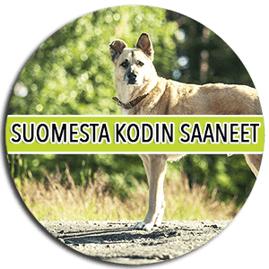 suomestakodinsaaneet