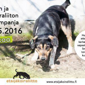etsijakoiraliitto_print