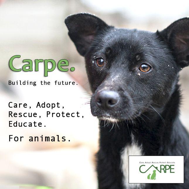 carpe1_insta