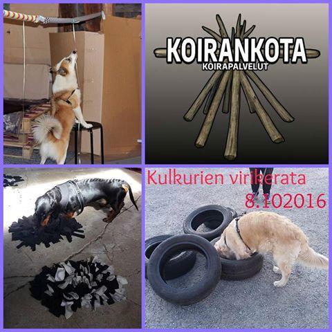 koirankota_turku