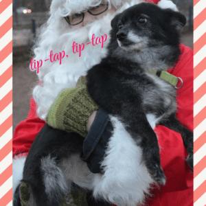Rescue-koira Titi viihtyi Joulupukin sylissä vuonna 2015