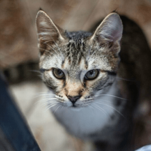kissat helsinki pirkanmaa