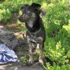 Kotia etsivä koira: KENSI (Suomessa kotihoidossa)