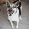 Kotia etsivä koira: HOPPER, ERITYISADOPTIO