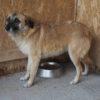 Kotia etsivä koira: ELENA