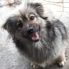 Kotia etsivä koira: KRIPTO