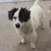 Kotia etsivä koira: LEONARDO