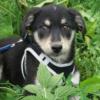 Kotia etsivä koira: PUPPY LUCY