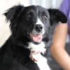 Kotia etsivä koira: BELLA B