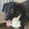 Kotia etsivä koira: MAYE