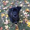 Kotia etsivä koira: LARRY (ent. GHEORGHE) SUOMESSA