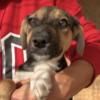 Kotia etsivä koira: ZAHIRA