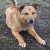Kotia etsivä koira: REETA