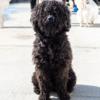 Kotia etsivä koira: PEKKO