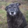 Kotia etsivä koira: RUUSA