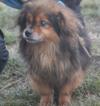 Kotia etsivä koira: SENOR BOBBY