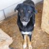Kotia etsivä koira: VALDUR