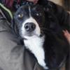 Kotia etsivä koira: VEIKO