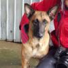Kotia etsivä koira: MALY