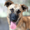 Kotia etsivä koira: KAYA