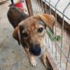 Kotia etsivä koira: DELTA