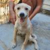 Kotia etsivä koira: MARC