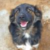 Kotia etsivä koira: BONGO BOY